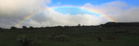 Horses graze upcountry with rainbow over pasture Haleakala Kula Maui Hawaii