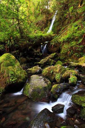 Bunch Creek Falls Quinault Valley Olympic Peninsula.