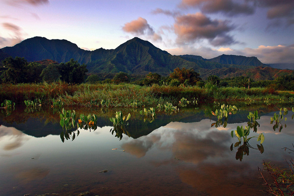 Taro Kalo ponds at sunrise Hanalei Kauai Hawaii